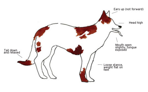 Dog Gestures, Languages, Communicate with a Dog