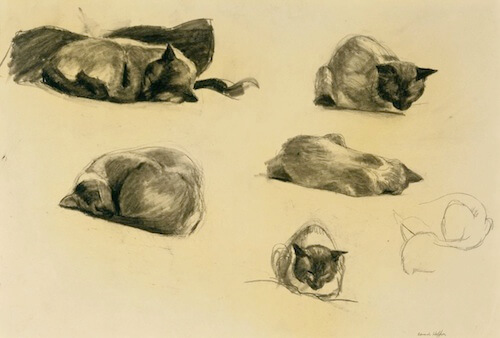 This Image (c) by Edward Hopper, Cat Study, 1941, conte crayon on paper. - THE MUSEUM OF FINE ARTS, HOUSTON/THE ALVIN S. ROMANSKY PRINTS AND DRAWINGS ASSOCIATION ENDOWMENT FUND AND THE MARJORIE G. AND EVAN C. HONORING PRINT FUND.