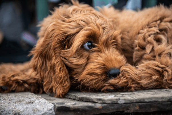 PUPPY TRAINING TIPS