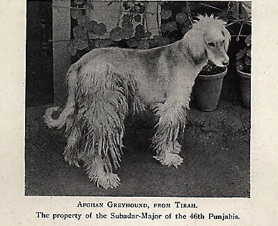 a history of the domestication of the dog Scientists believe the domestication of dogs began 18000-33000 years ago but  they're divided  the origins of dog/human companionship spanish dog cave.