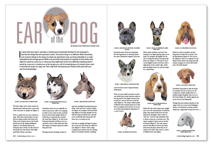 Dog Ears Types & Shapes