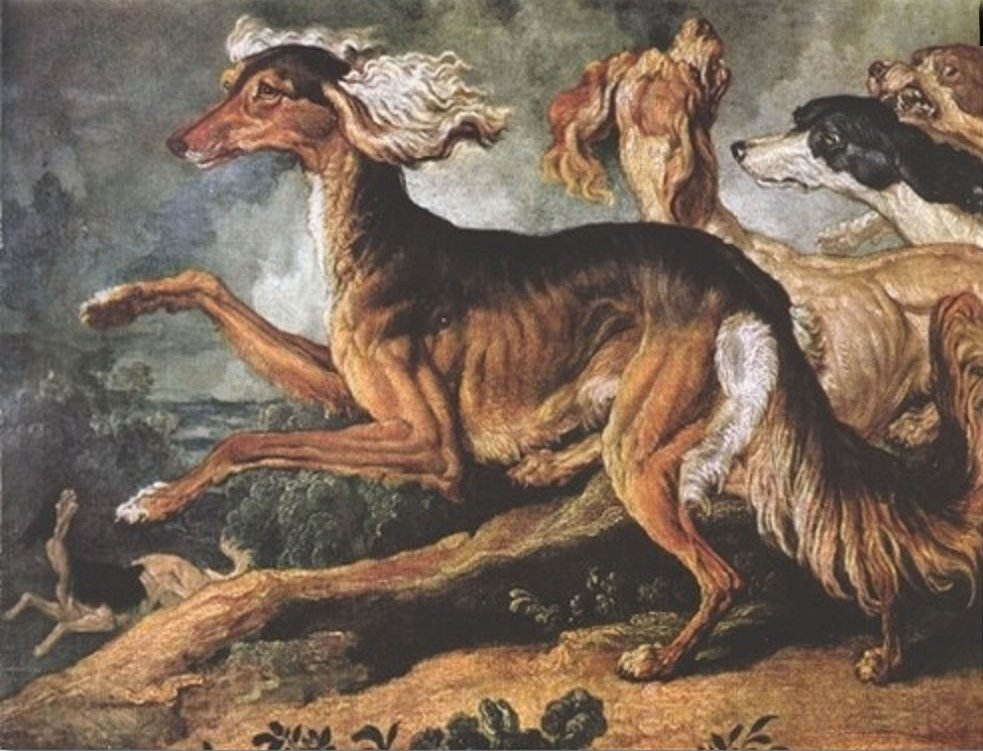 Ancient Dog Breeds Look Evolution