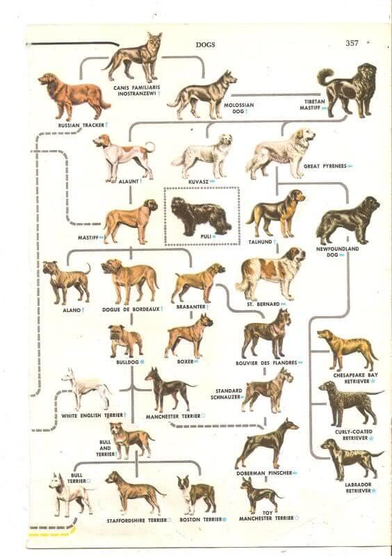 DOG EVOLUTION & HISTORY - DOGICA® 3D Dog Domestication ...
