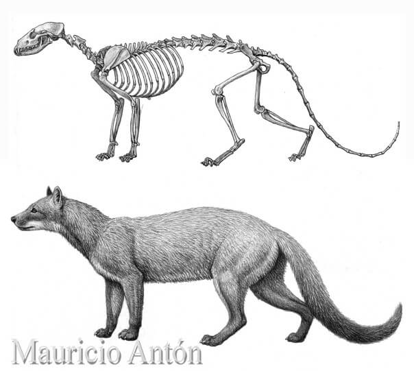 DOG EVOLUTION, ORIGINS and HISTORY