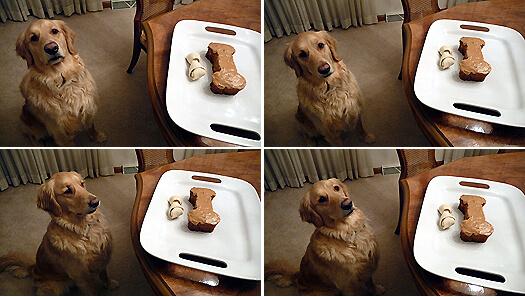 Рецепт торт для собаки
