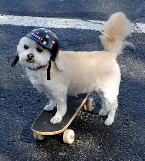 HOW TO TEACH YOUR DOG TO SKATEBOARD - TRAINING TECHNIQUES & TIPS