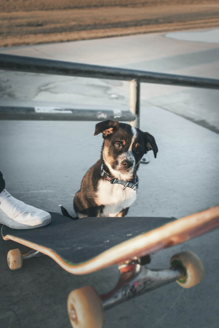 SKATEBOARDING WITH A DOG
