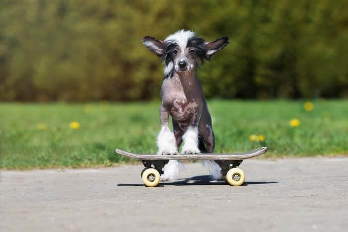WHY SOME DOGS HATE SKATEBOARDS?