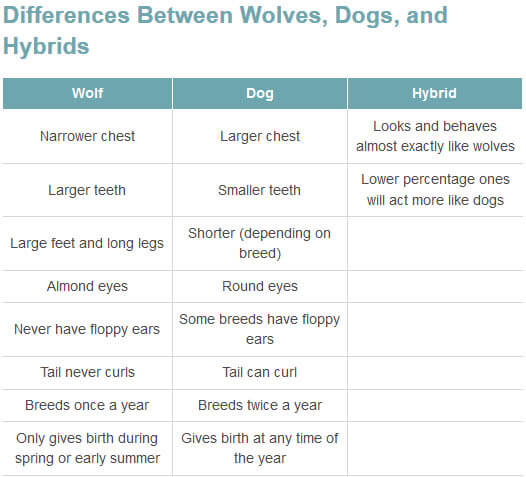 DOG vs WOLF DIFFERENCES - THIS INFO by WWW.PETHELPFUL.COM