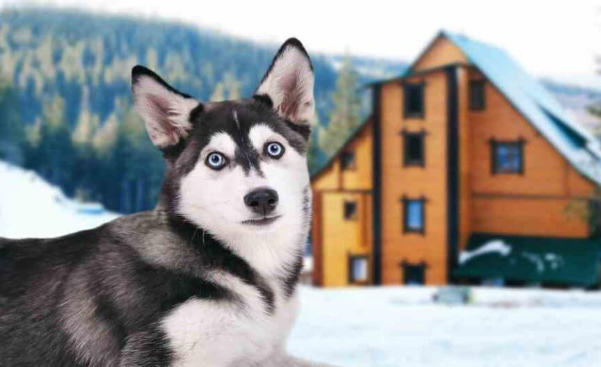 BEST GUARD DOG BREEDS FOR HOME & FAMILIES