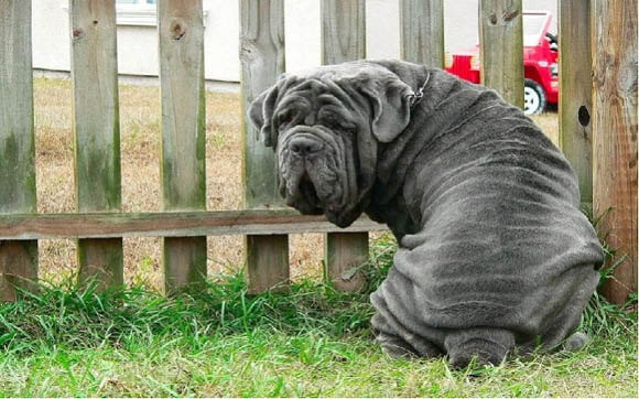 BEST GUARD DOG BREEDS FOR FAMILY AND HOME