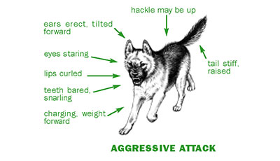 Dog Gestures, Dog Body Language