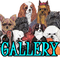 DOGICA® GALLERY