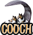 DOG BED & COACH - DOGICA&reg