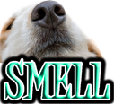 DOG SNIFF and SMELL