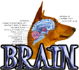 DOG BRAIN - DOGICA&reg