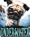 UNDERWATER DOGS VIDEOS - DOGICA&reg