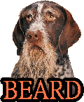 BEARDED DOGS