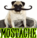 DOG MUSTACHE & WHISKERS