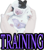 PUPPY TRAINING - DOGICA®