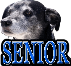SENIOR AGING OLDER DOGS HEALTH CARE