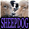 SHEEPDOGS & FARM DOGS