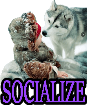 SOCIALIZE YOUR DOG & PUPPY
