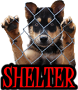 DOG SHELTERS (Worldwide)