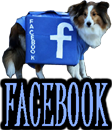 DOGS and SOCIAL NETWORKS