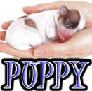 DOG PUPPIES - DOGICA&reg