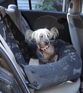 DOG TRAVEL IN CAR - SAFETY, BELTS, CARRIERS, CRATES