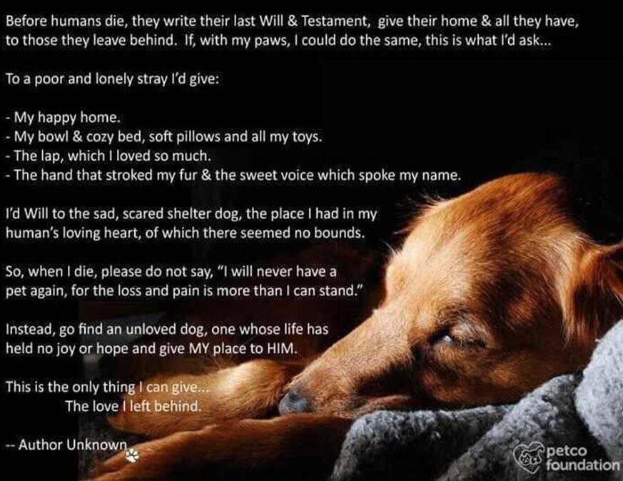 Dog Euthanasia, Dog R.I.P, How to deal with Dog Loss, Virtual Dog Memorials, Infograms, Infographic
