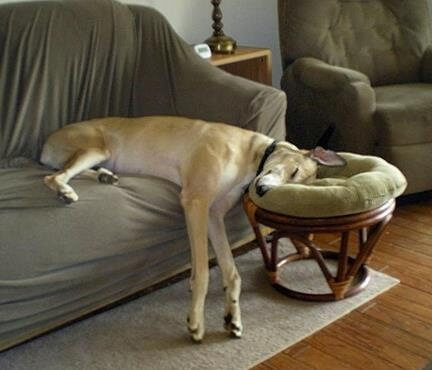 DOG SLEEP POSITIONS