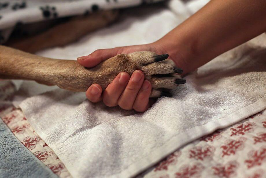 Dog Euthanasia, Dog R.I.P, How to deal with Dog Loss, Virtual Dog Memorials