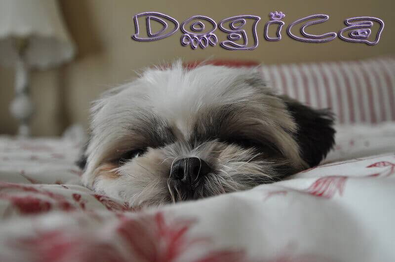 Dog Dreams, Do dogs dream? Dog Dreams Inn and Video