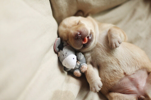 DOG SLEEP VIDEO, PHOTO, INFOGRAM, CUTE FUNNY SLEEPING PUPPY