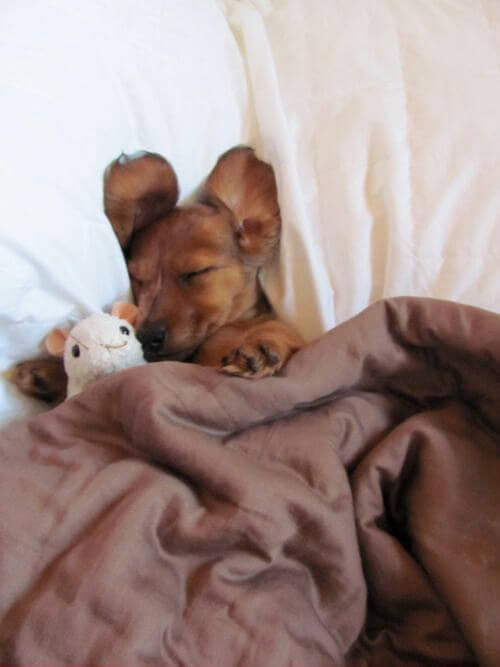 DOG SLEEP POSITIONS, HOW MUCH DOGS DREAM IN AVERAGE? CUTE FUNNY SLEEPING PUPPY