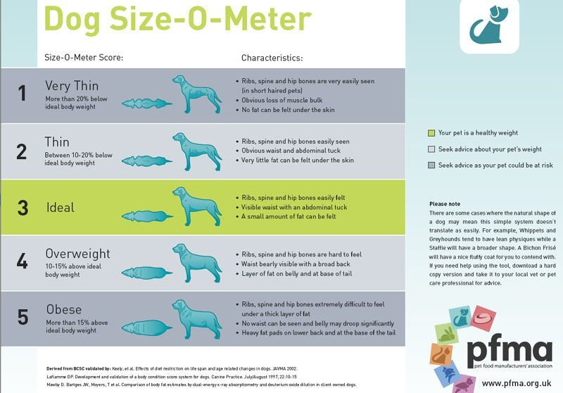 PUPPY DOG SIZE GUIDE