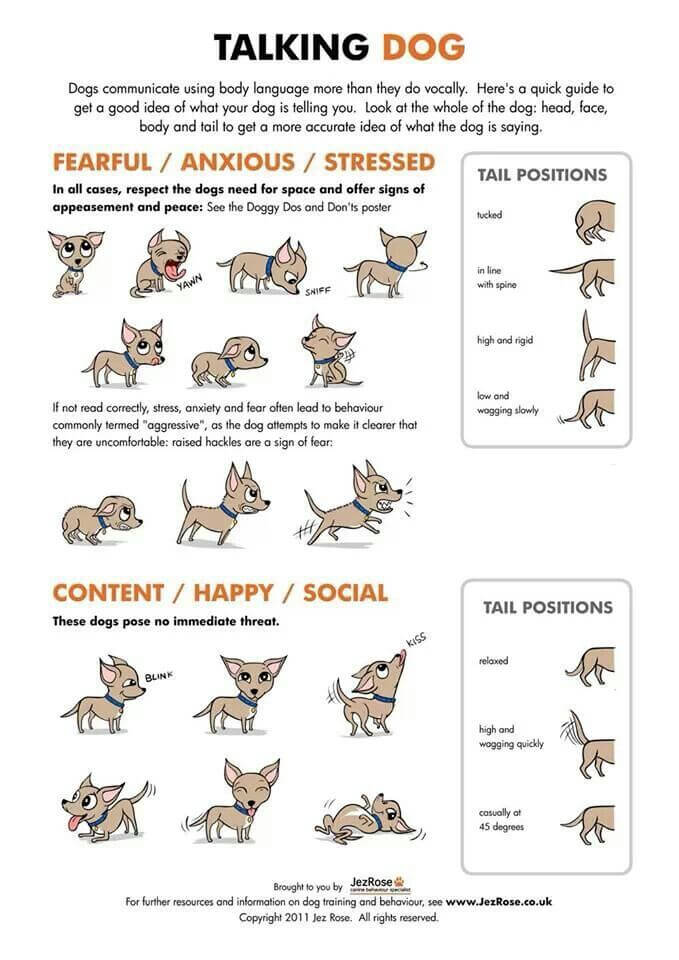 Understand Your Dog's Talking