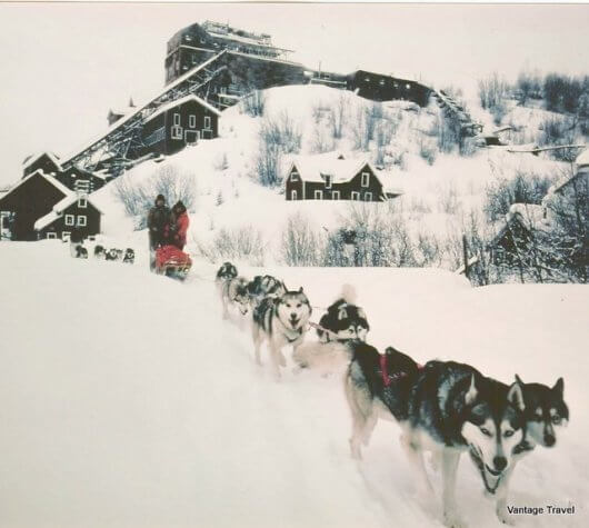 Sled Dogs Mushing TOURS
