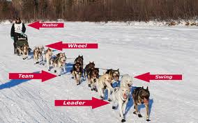 Dog Sled Race, Fastest Dog Breeds, Speed of Dogs