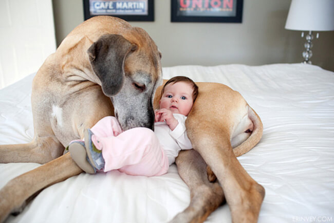 Dogs and kids, puppies and children