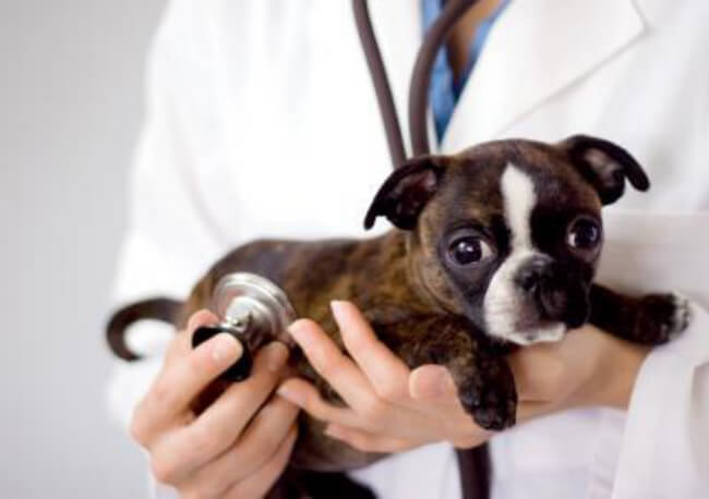 Dogs Medicine, Veterinary, First Aid
