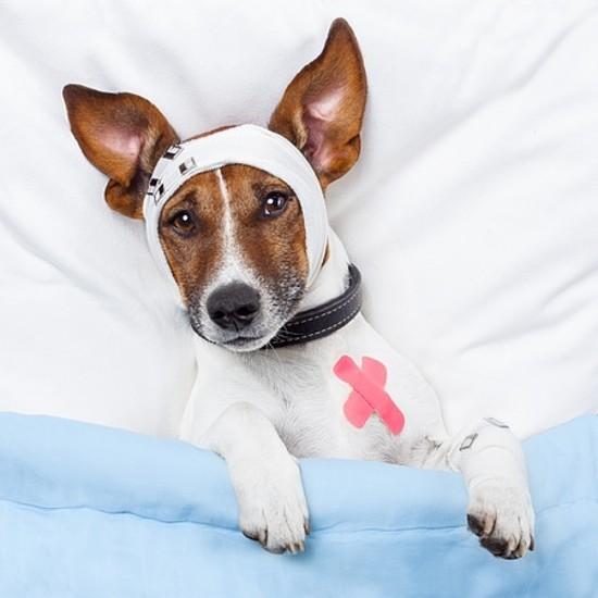 DOG FIRST AID MEDICINE VETERINARY