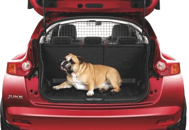 DOG TRAVEL IN CAR