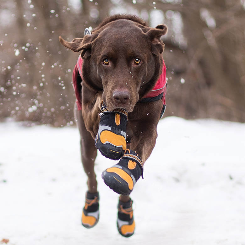 Dog Wears Boots, Dog Shoes, Dog Booties
