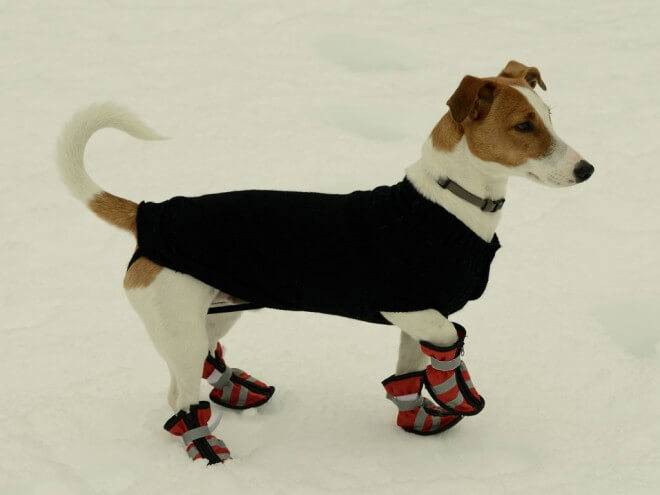 How to Get Dog used to Shoes and Boots Types, Sizes, Cost
