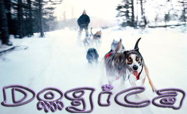 Sled Dog Race, Sledding Dogs Competition, Alaskian, Siberian Husky and Malamutes, Fastest Dog Breeds, Speed of Dogs
