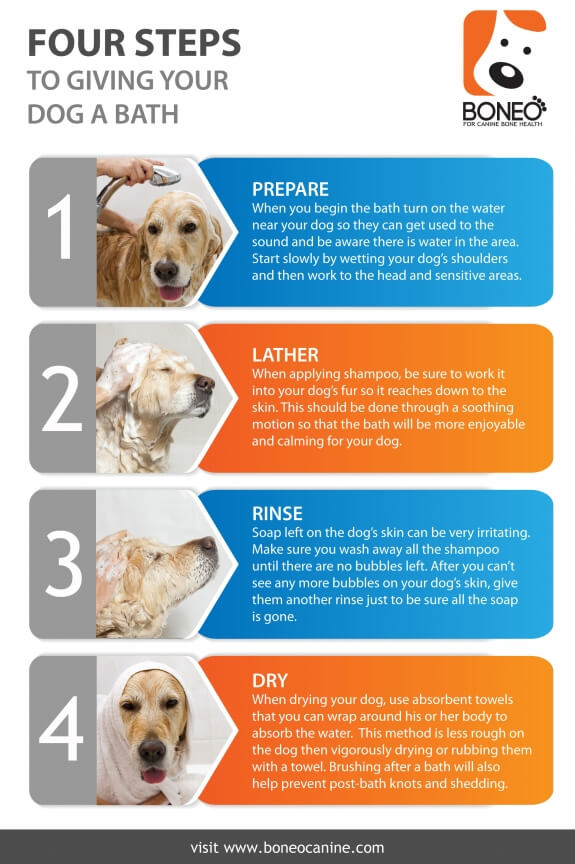 HOW TO GIVE A BATH AND A SHOWER TO YOUR DOG & PUPPY INFOGRAPHICS, PRESS TO SEE IN FULL SIZE !!!