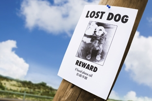 lost doggy